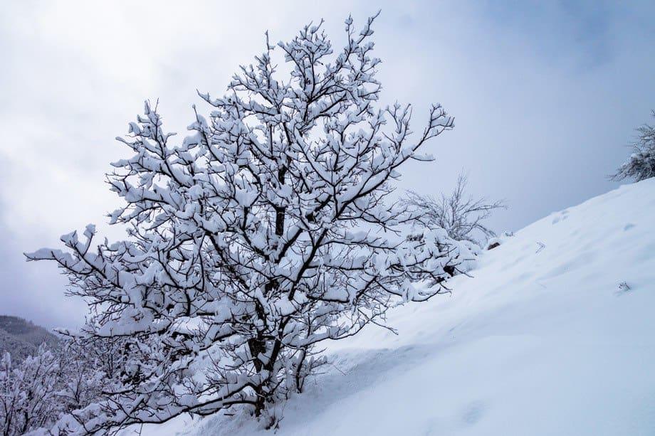 Tree Kosovo Houses Bulgaria
