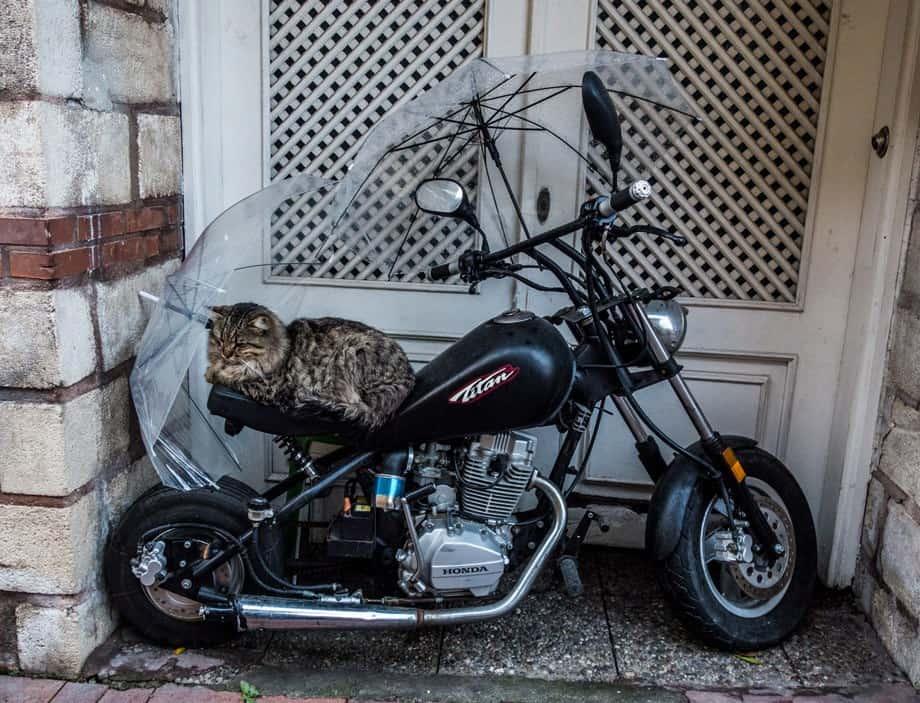 Stray Cat Istanbul