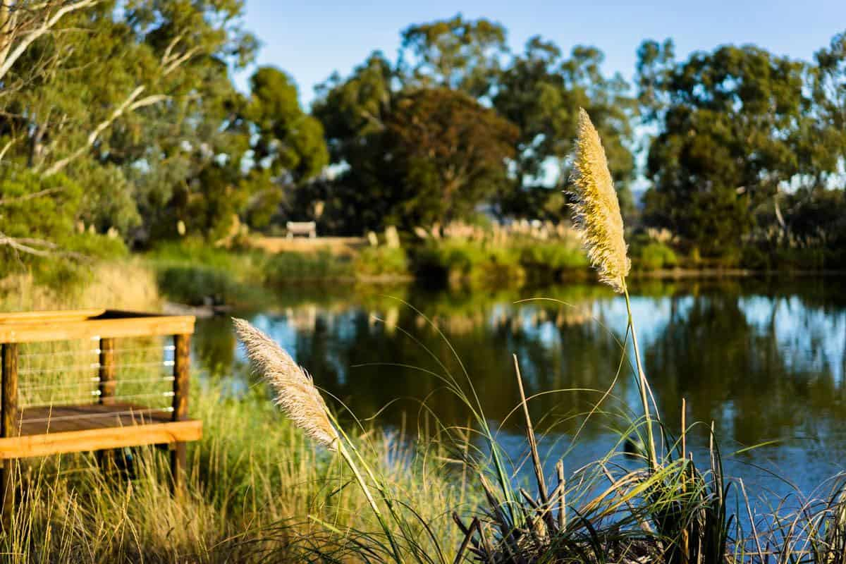 Lake Maggie Beer Indian Pacific Rail Journey