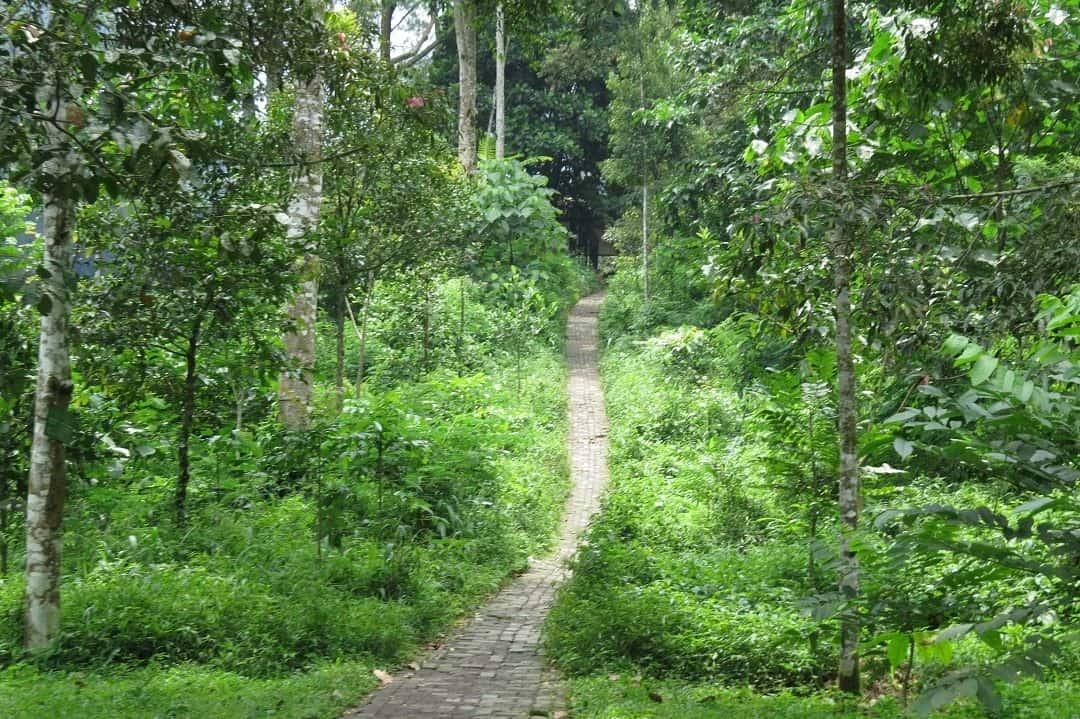 Dago Pakar Best Hiking In Bandung