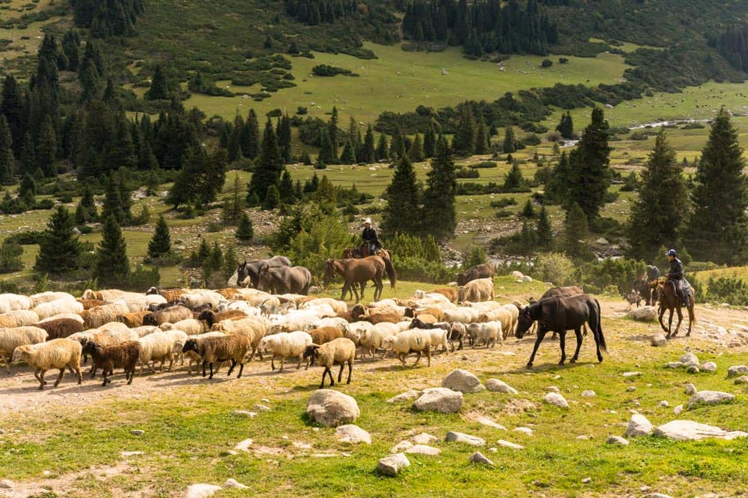 Shepherds Hiking In Jyrgalan