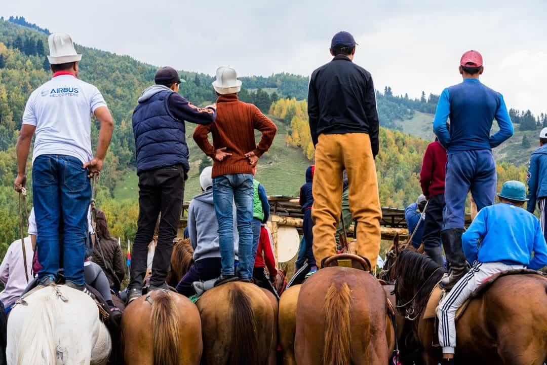 Horses View