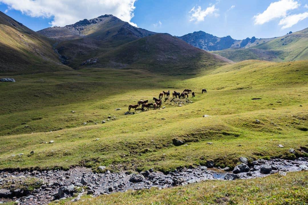 Horses Jyrgalan Trek