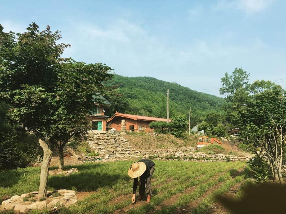 Wwoofing In South Korea