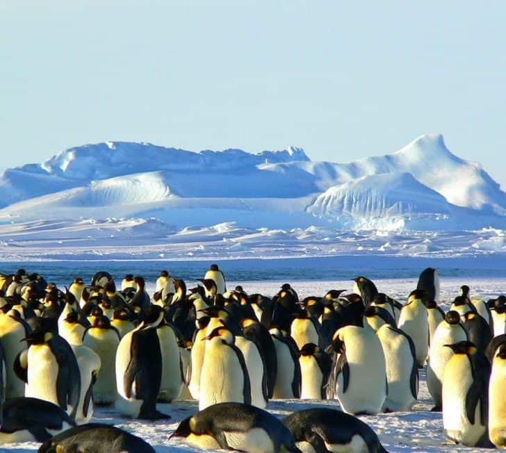 The Final Frontier – We're Going To Antarctica!