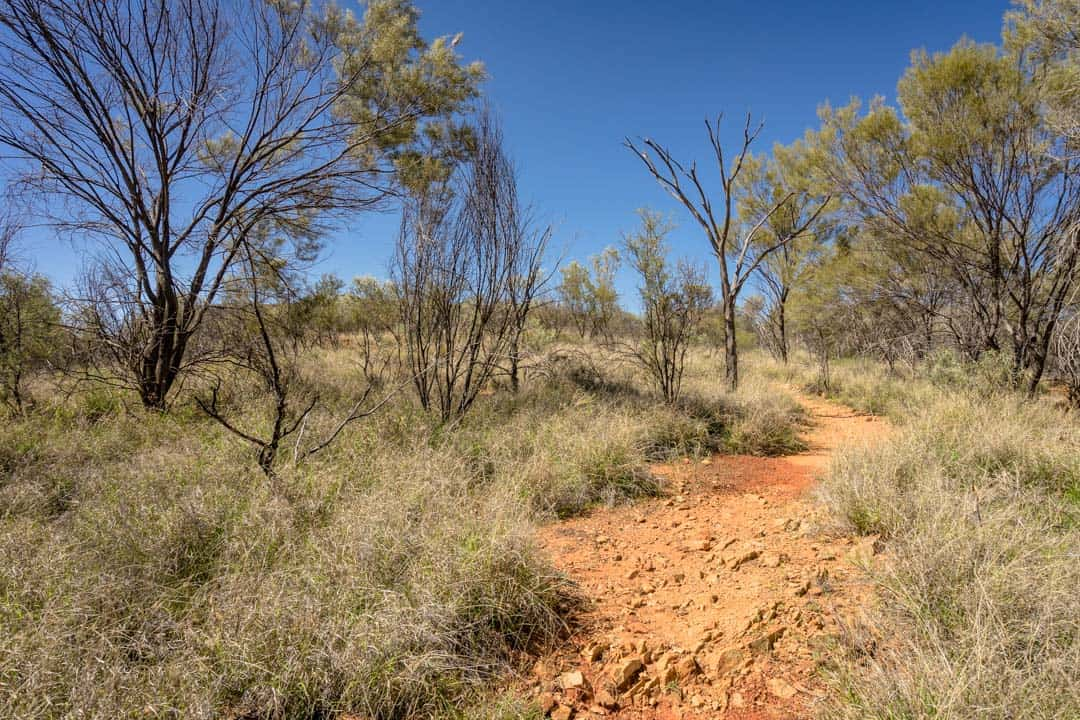 Hiking Trail Simpsons Gap The Ghan Off Train Excursion