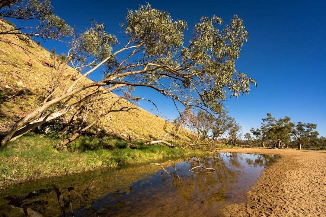 Roe Creek Simpsons Gap The Ghan Off Train Excursion