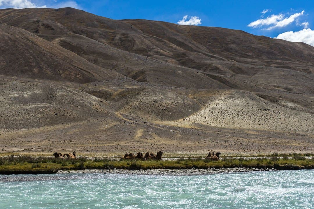 Camels Afghanistan Pamir River Pamir Highway Adventure