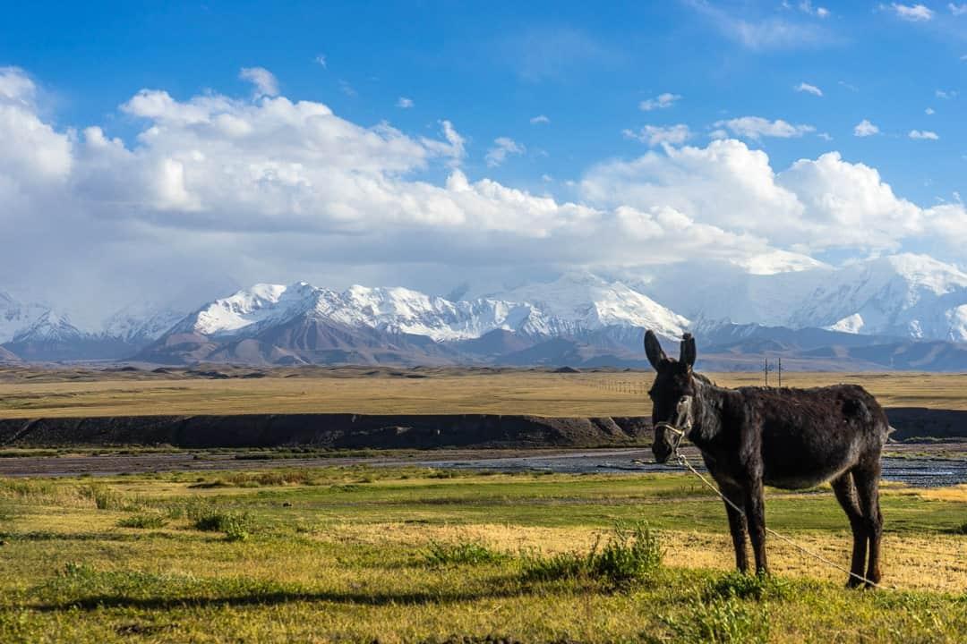 Peak Lenin Donkey Pamir Highway Adventure