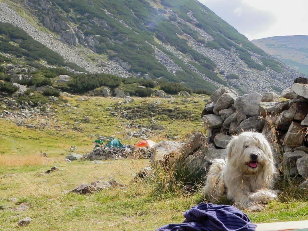 Shepherd Dog Hiking In Romania