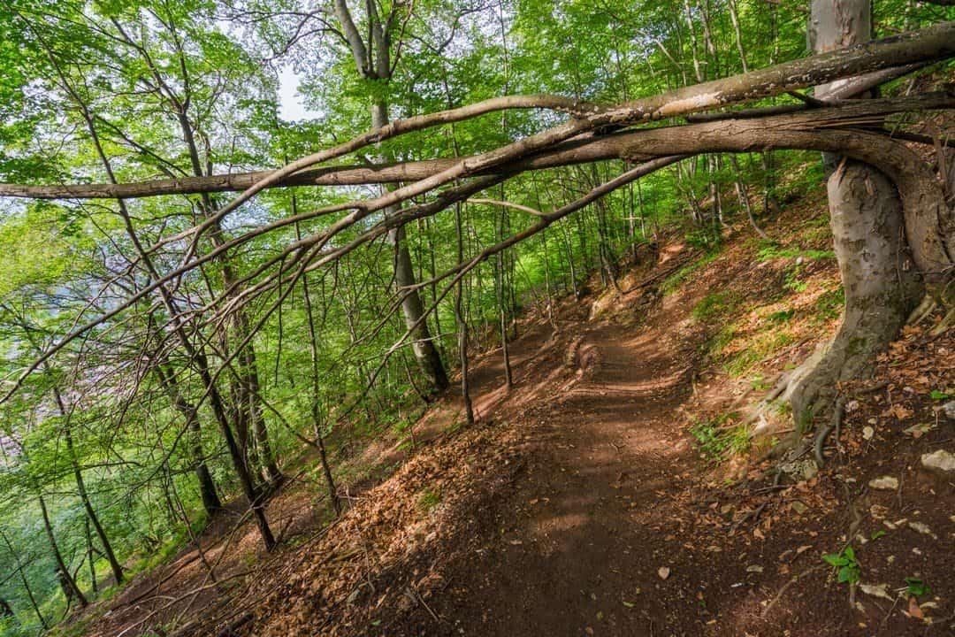 Hiking In Romania Mountain Walk