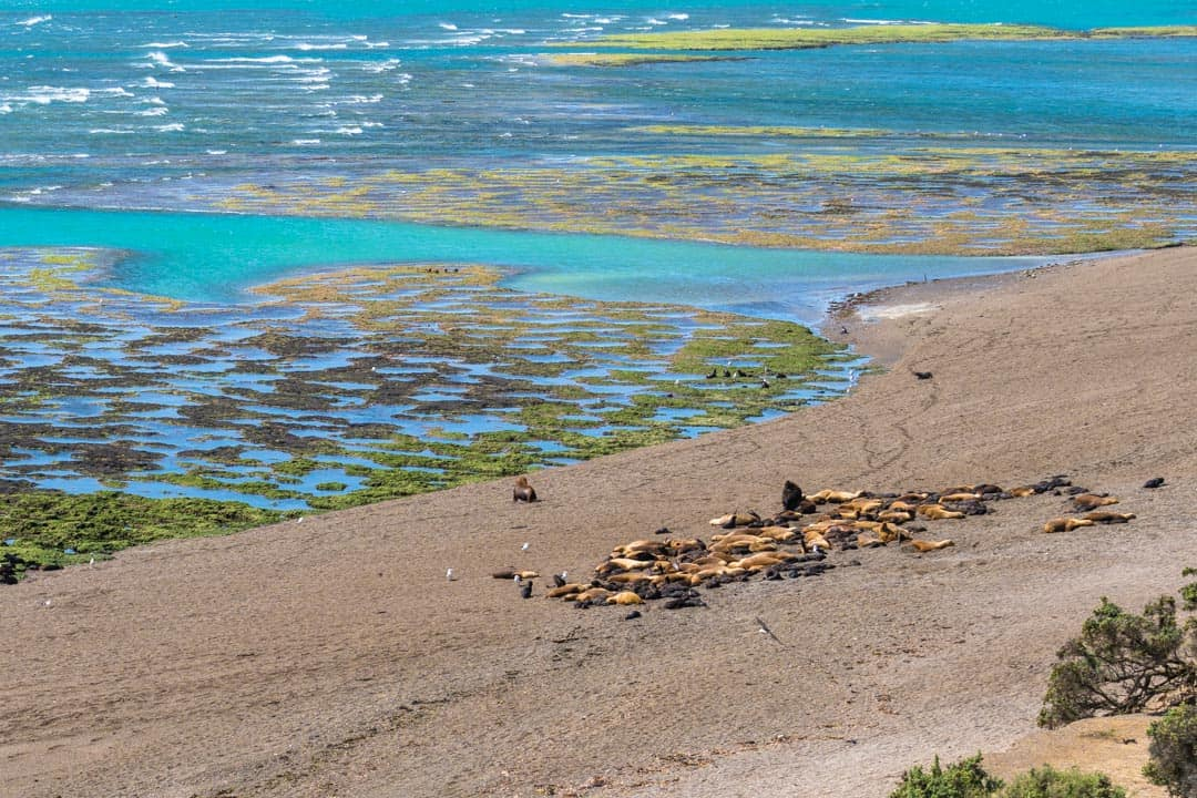 Sea Lions Punta Norte Things To Do In Puerto Madryn