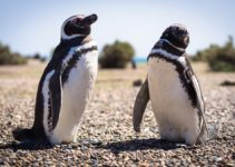 8 Awesome Things to Do in Puerto Madryn, Argentina