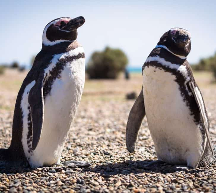 8 Awesome Things to Do in Puerto Madryn, Argentina (2020 Guide)