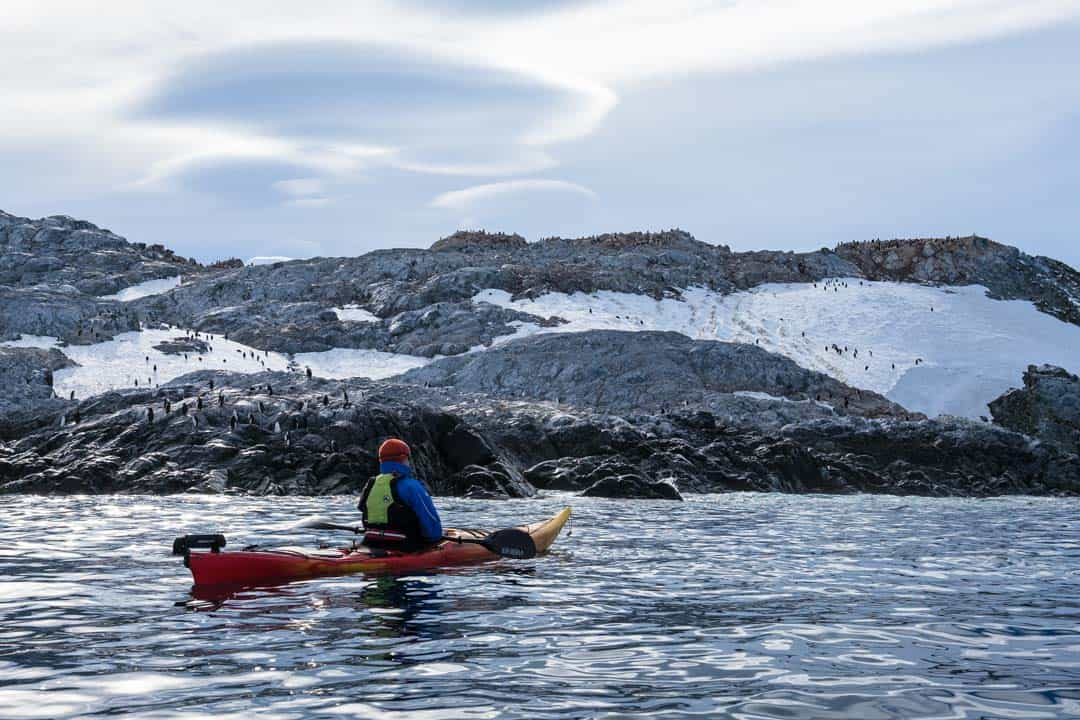 Penguins Cierva Cove Kayaking