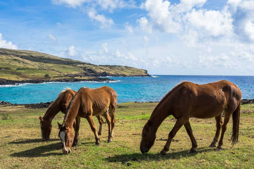 Horse Riding Things To Do In Easter Island