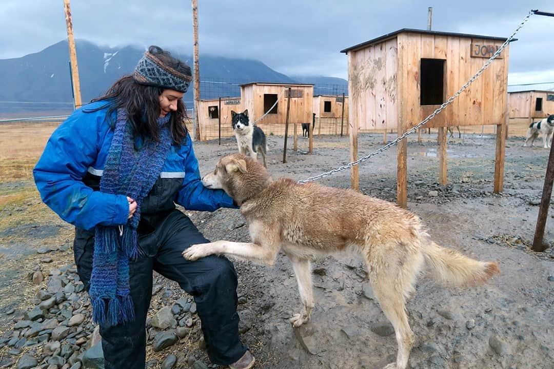Dog Sledding - Adventure Activities In Svalbard