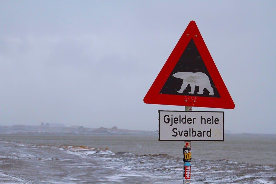 Polar Bear Sign - Adventure Activities In Svalbard