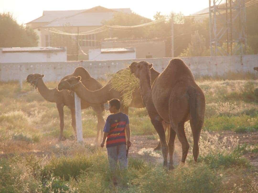 A Young Camel Herder Outside Turkmenistan - Obviously A Barcelona Fan