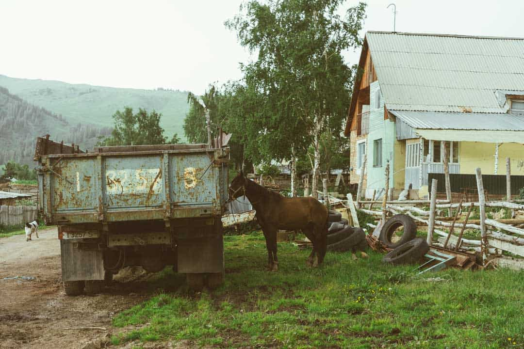 Horse Jyrgalan Village Kyrgyzstan