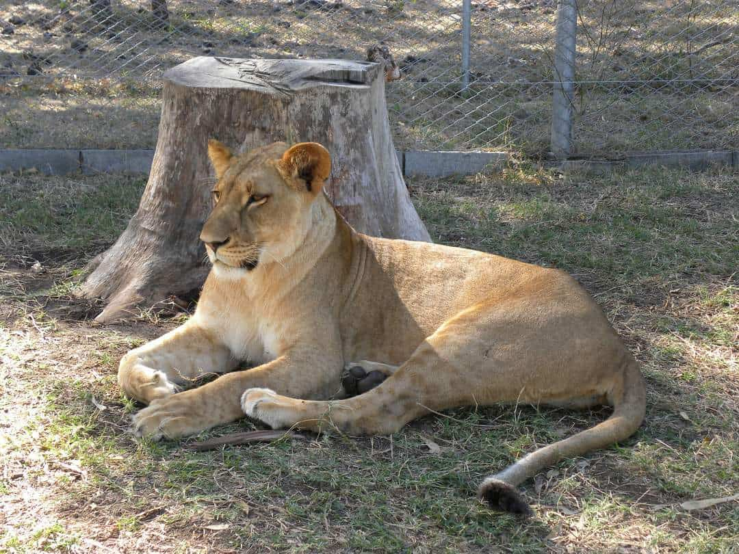 Casela Wildlife Park - Things To Do In Mauritius