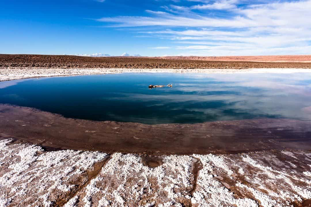 Floating Lake Atacama Desert Photos Of Chile