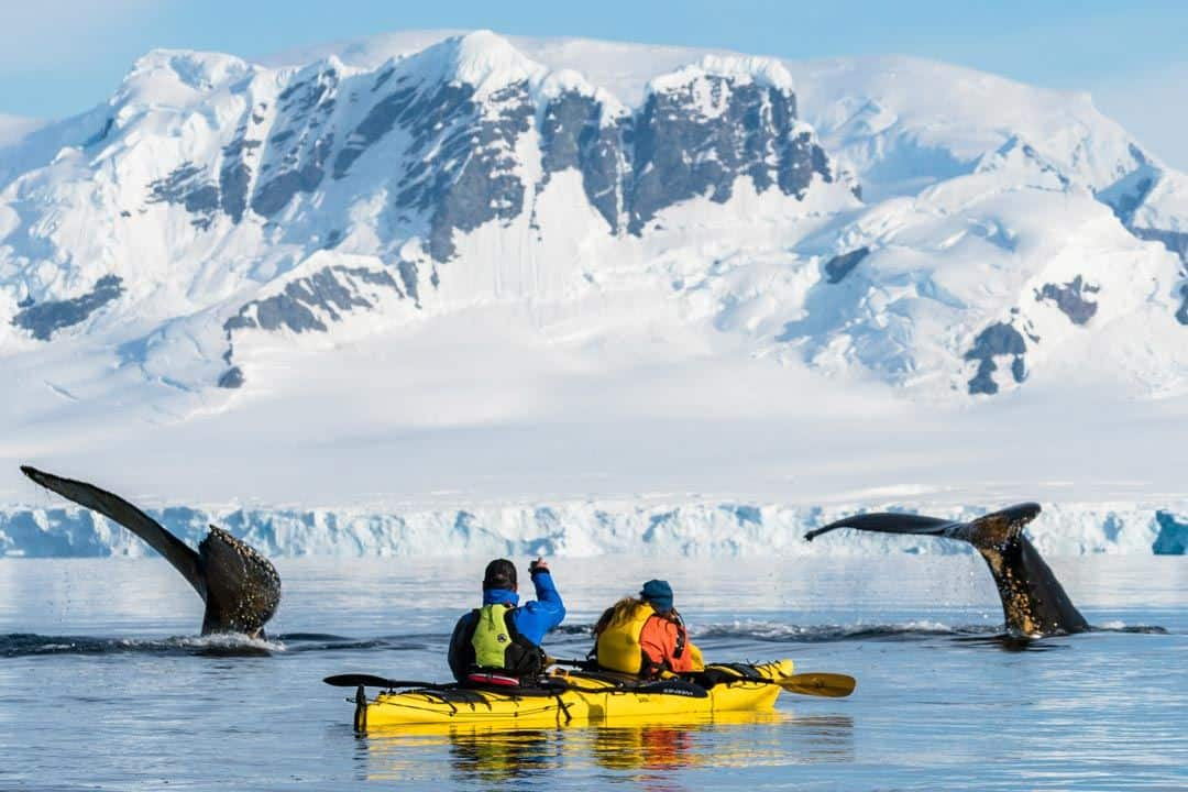 Humpback Whales Kayaks Wildlife In Antarctica