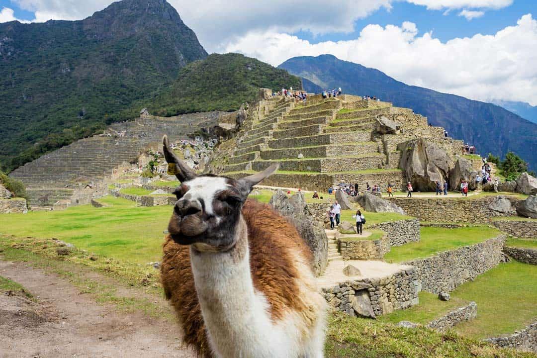 Llama Machu Picchu Cusco Sacred Valley 5 Days