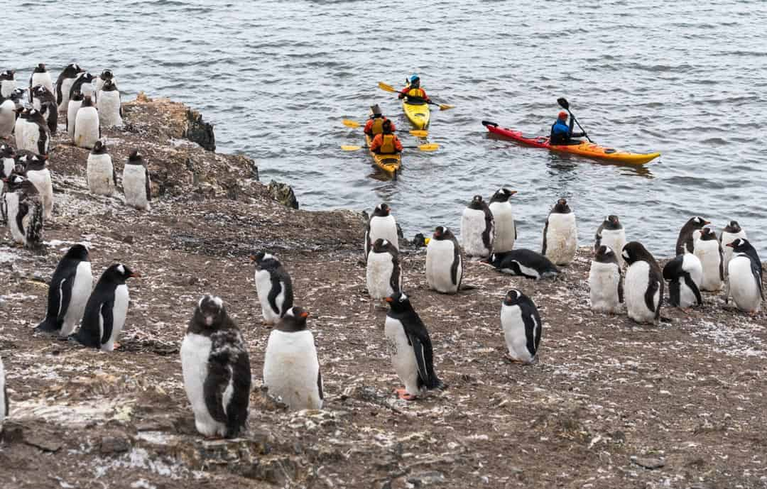 Penguin Kayaker Wildlife In Antarctica