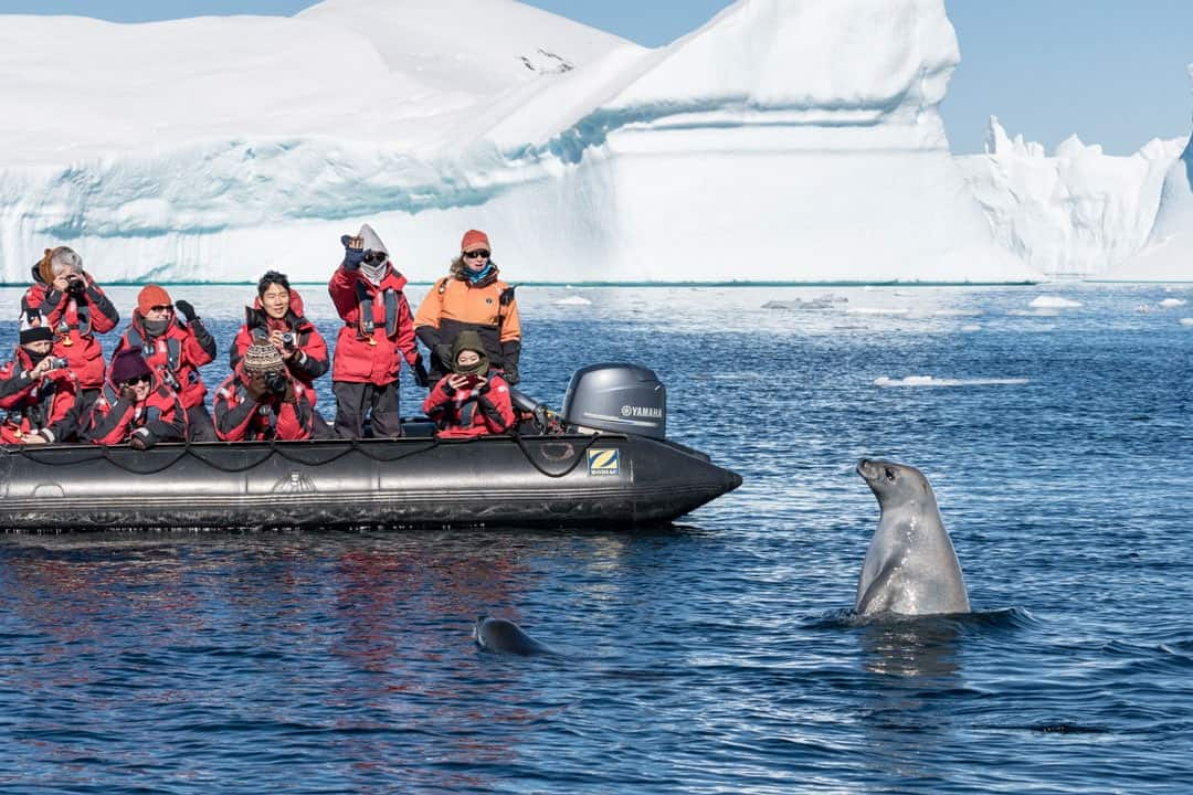 Seal Zodiac Wildlife In Antarctica