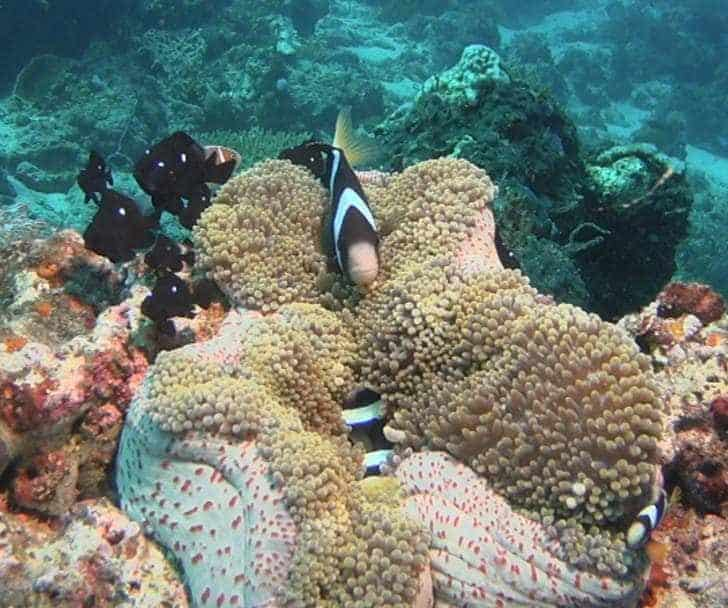 Scuba Diving In Maumere, Indonesia