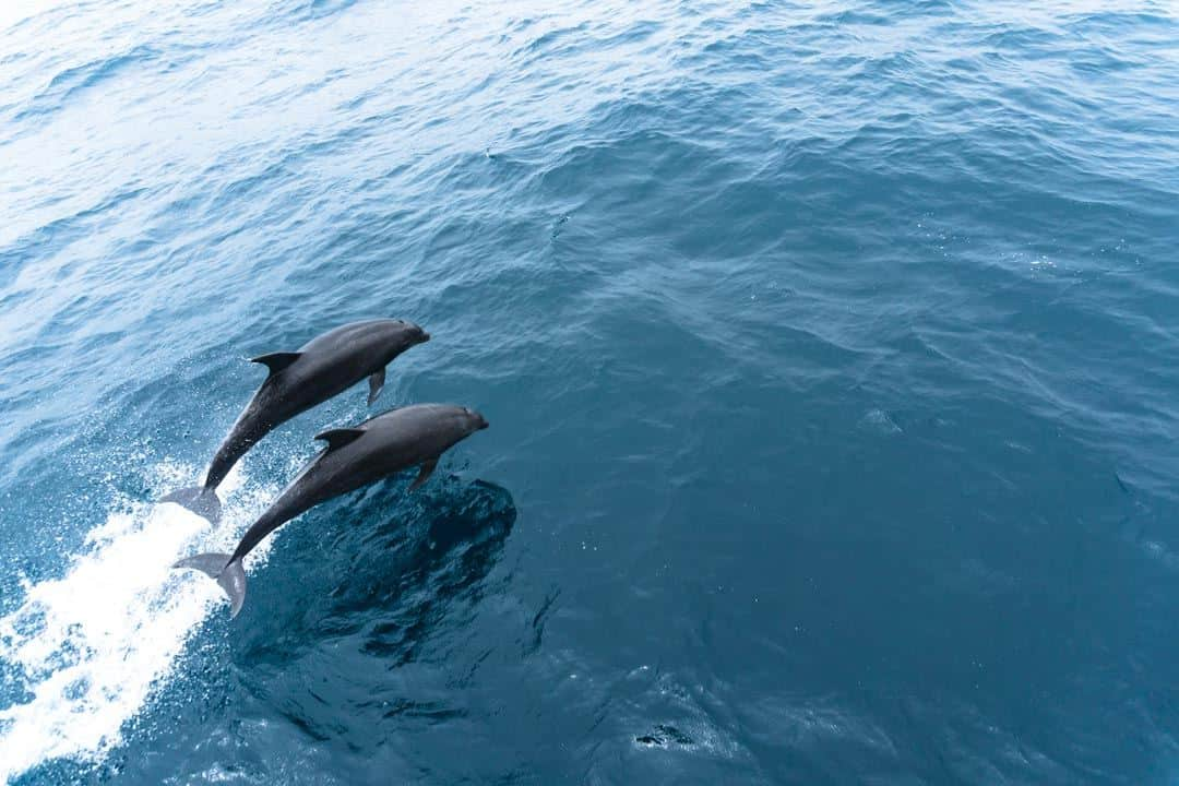 Bottlenose Dolphins Galapagos Islands Pictures