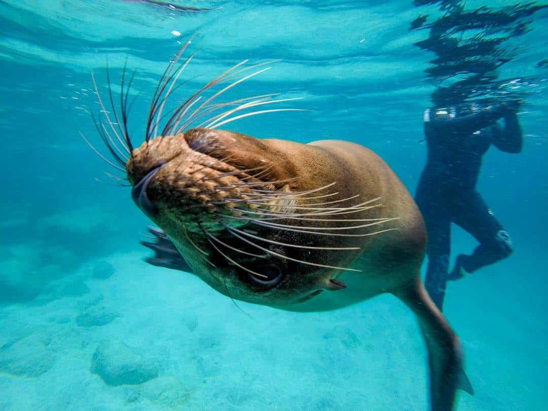 Sea Lion Gopro Galapagos Islands Pictures