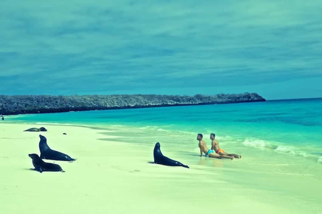 Galapagos Espanola Island Sea Lions Adventure Activities In Ecuador