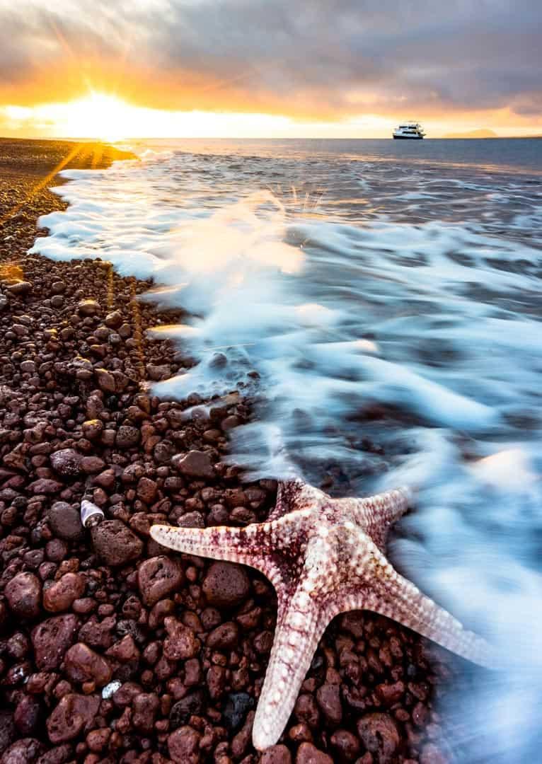 Rabida Island Galapagos Islands Pictures