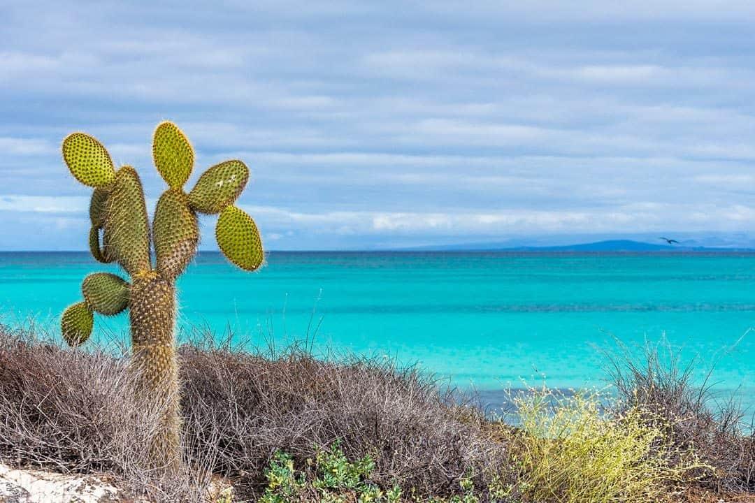 Cactus Beach Galapagos Islands Pictures