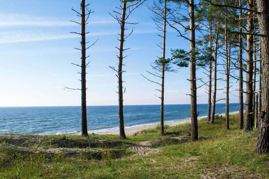 Forest Karosta Beach Latvia