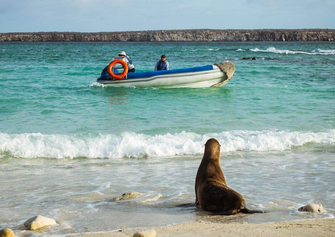 Sea Lion Genovesa Letty Galapagos Islands Ecoventura Itinerary B Review