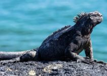 Cruising The Northern And Western Galapagos Islands With Ecoventura