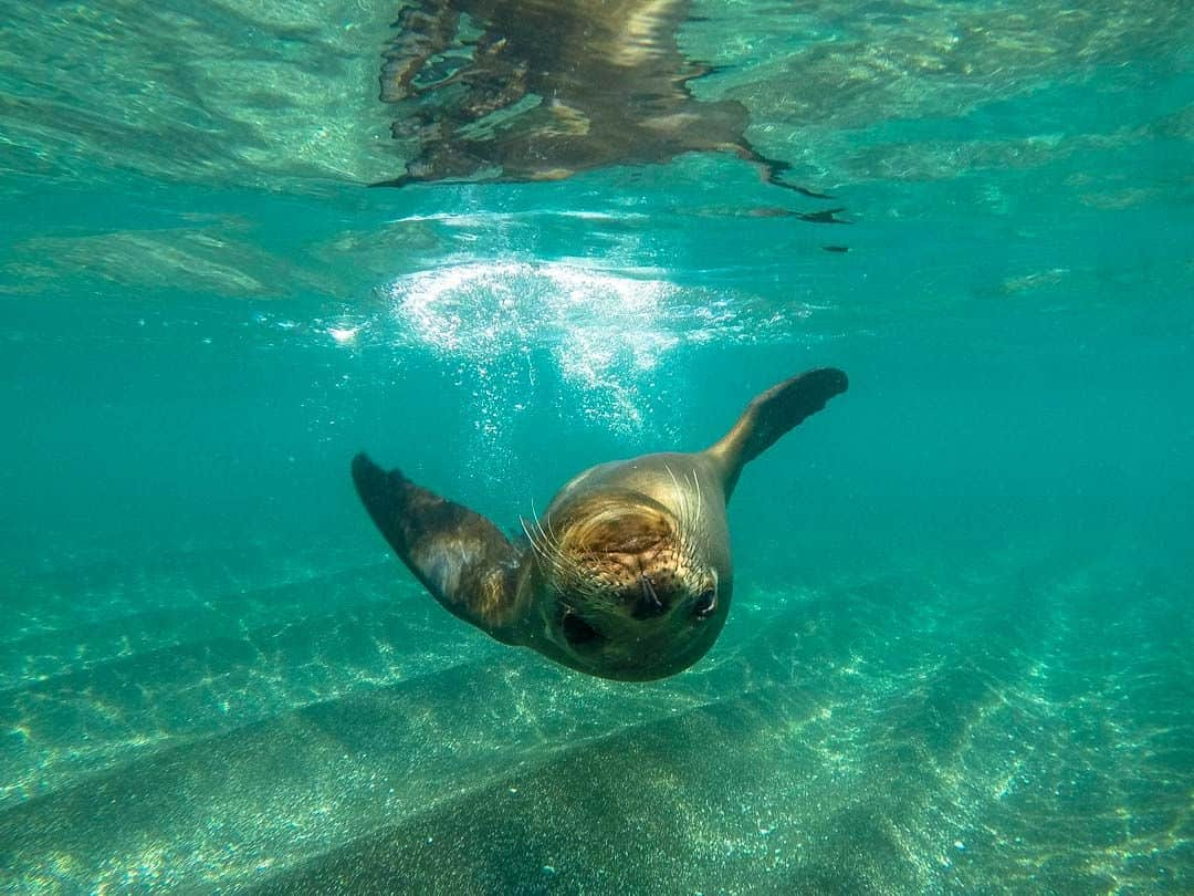Sea Lion Snorkelling Letty Galapagos Islands Ecoventura Itinerary B Review