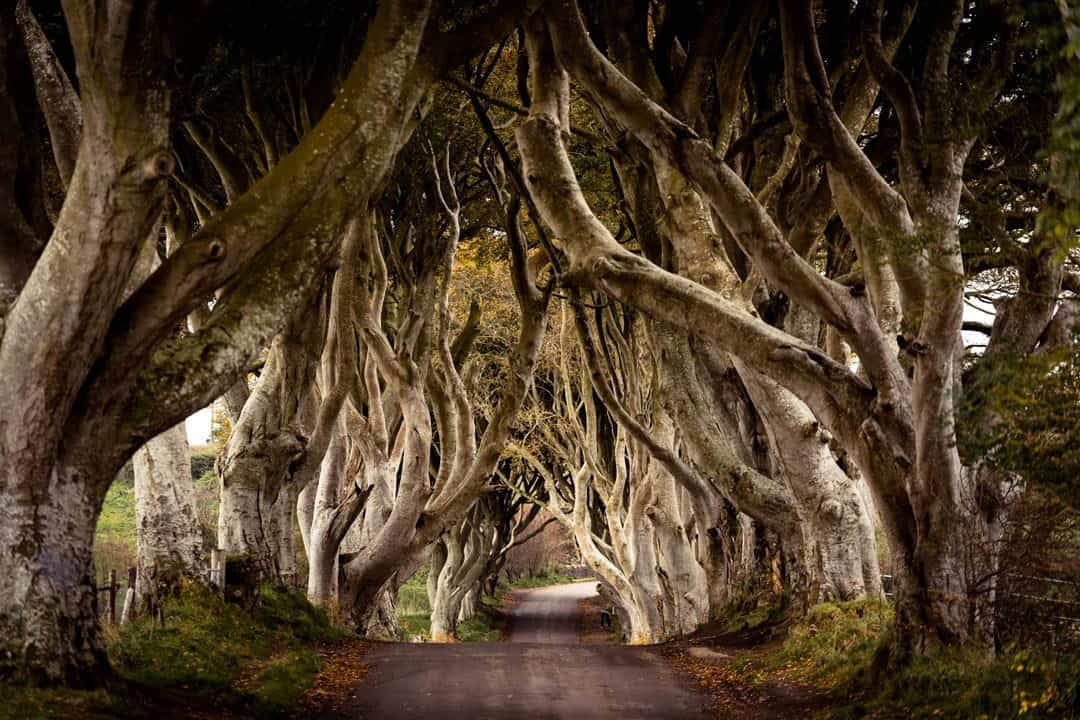 Dark Hedges Game Of Thrones Northern Ireland Road Trip Campervan