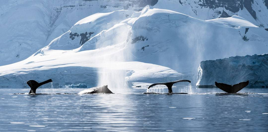 Low Season How To Travel To Antarctica Responsibly