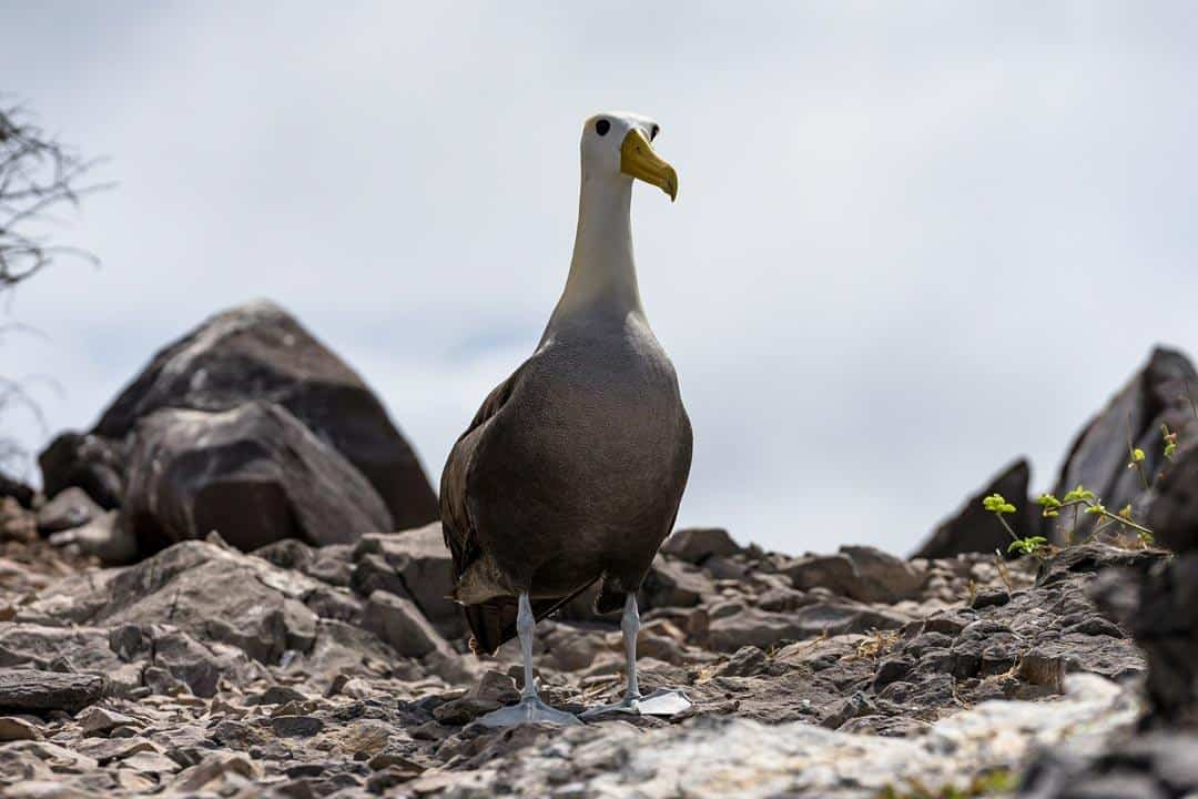 Albatross Ecoventura Itinerary A Review Origin Galapagos Islands