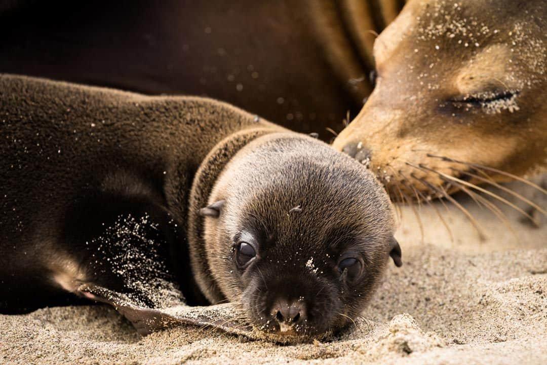 Ecoventura Itinerary A Review Origin Galapagos Islands