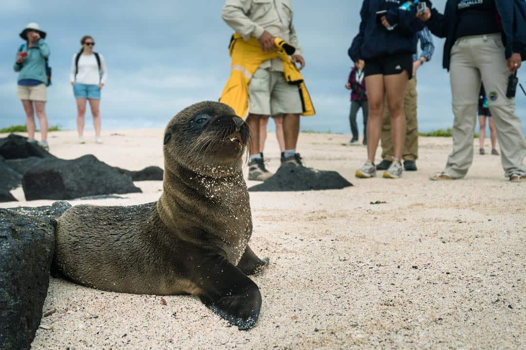Sea Lion Pup Ecoventura Itinerary A Review Origin Galapagos Islands