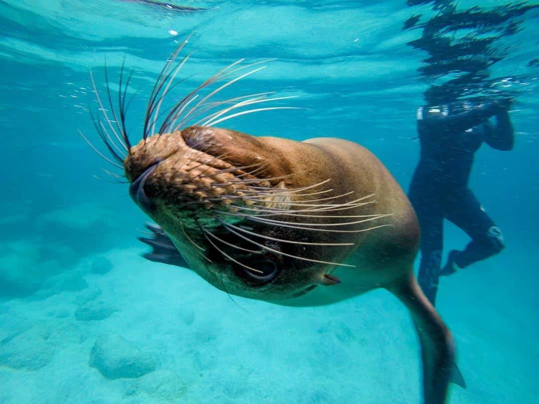 Sea Lion Ecoventura Itinerary A Review Origin Galapagos Islands