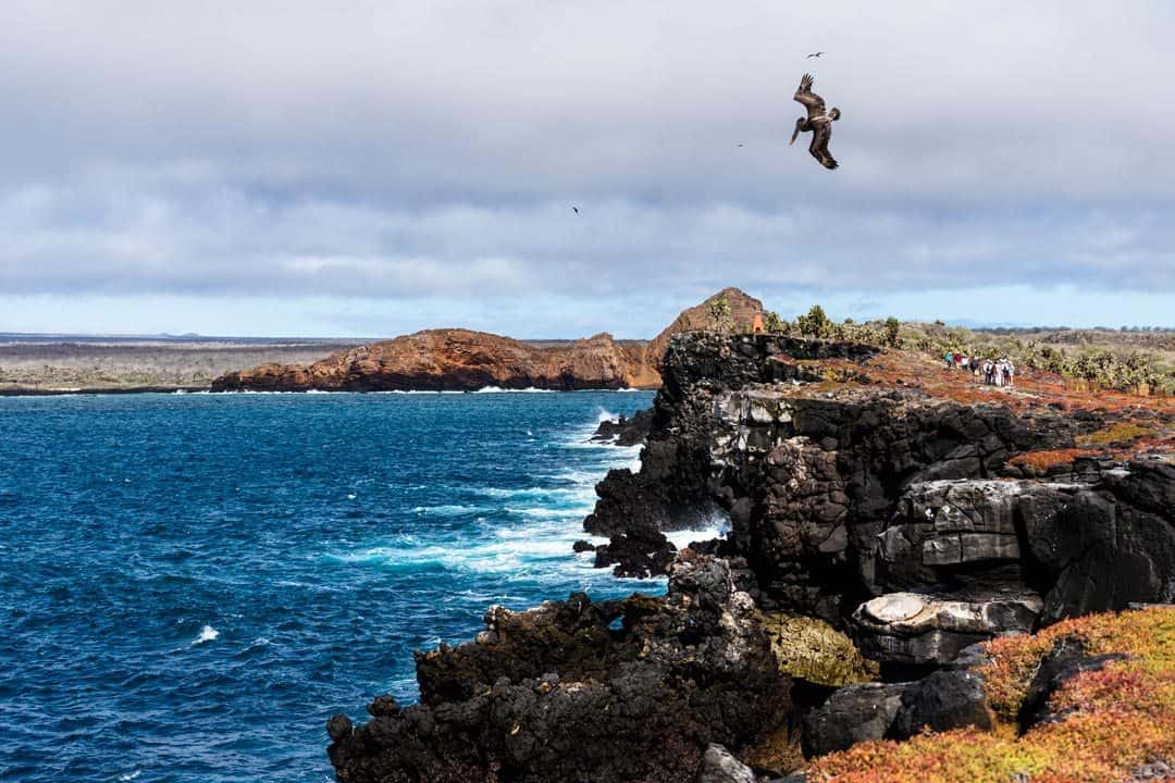 South Plaza Island Ecoventura Itinerary A Review Origin Galapagos Islands