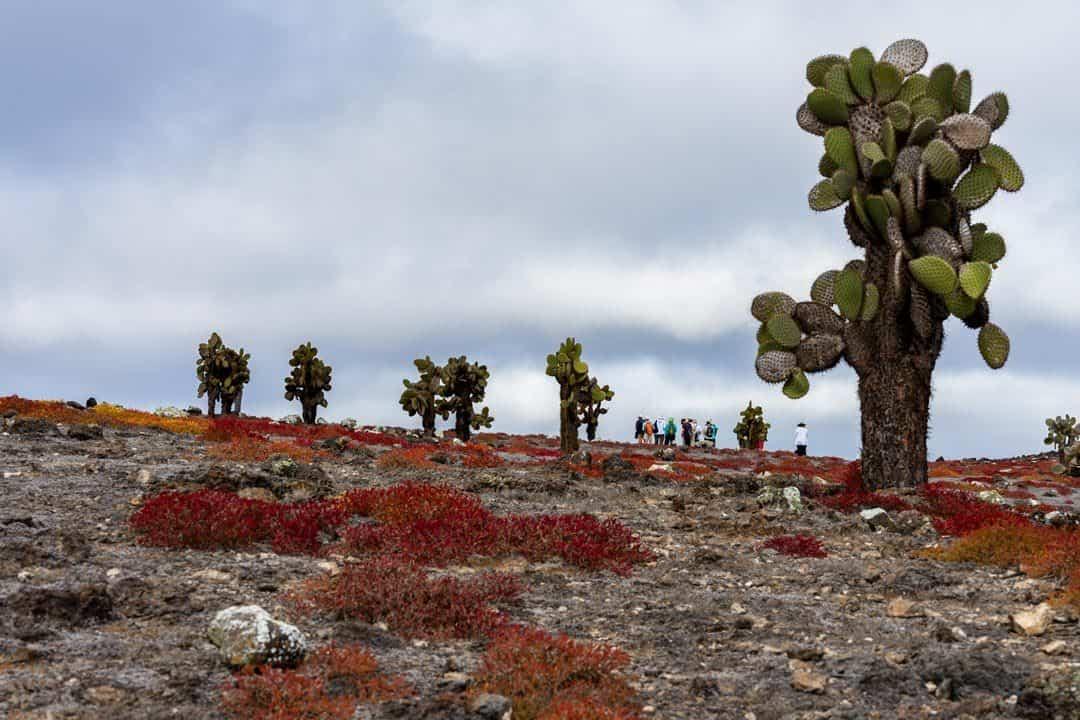 Cacti Ecoventura Itinerary A Review Origin Galapagos Islands