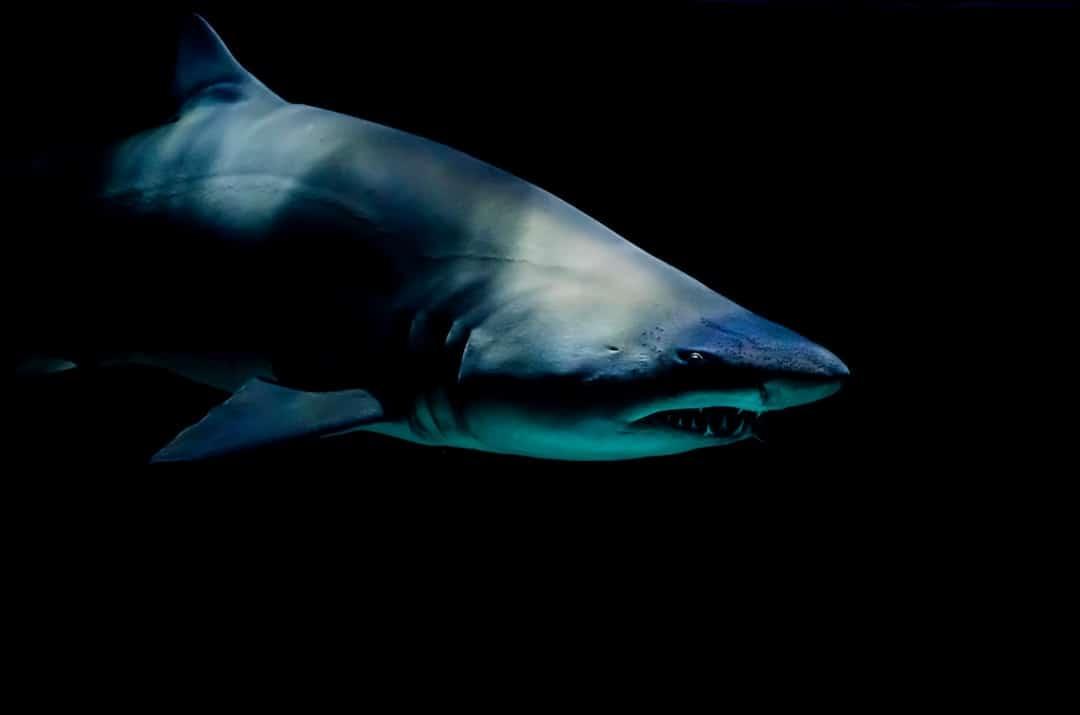 Shark Cage Diving Adventure Activities In Australia