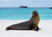 Cruising The Central and Southern Galapagos Islands with Ecoventura